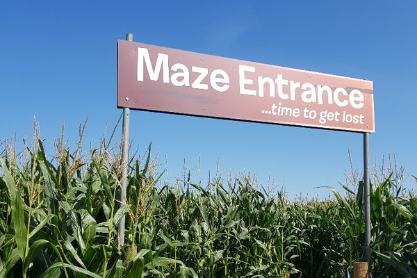 Churchfields Maize Maze